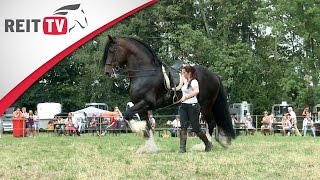 getlinkyoutube.com-Das Shire Horse - Zu Besuch auf der Oakstead Shire Show