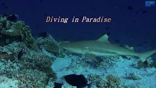 getlinkyoutube.com-Diving in Paradise Diving Embudu Maldives 4K
