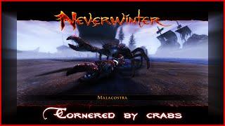 getlinkyoutube.com-Neverwinter Online Lazalia soloing Cornered by Crabs