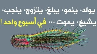 getlinkyoutube.com-10 كائنات حياتها أقصر مما تتخيل !