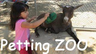 getlinkyoutube.com-Petting ZOO Children's ZOO Feeding Goats Learn Animals Names for Kids