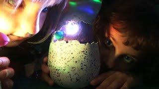 getlinkyoutube.com-MAIS QUI SE CACHE DERRIERE L'OEUF ? - Nouveau Jouet Hatchimals • Studio Bubble Tea unboxing