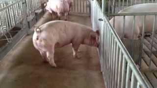 getlinkyoutube.com-Jhon and Jhon Farms