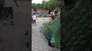 T Hossain, Prospect Park Zoo at Eid Day 2017