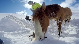 getlinkyoutube.com-GoPro: Chilean Horse Rescue