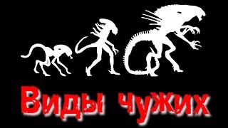 getlinkyoutube.com-Чужой - Виды | Alien - Xenomorph