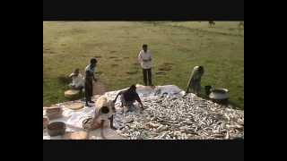 getlinkyoutube.com-FISHING IN BANGLADESH NABIGONJ HOBIGONJ BD 15