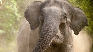 getlinkyoutube.com-Wild India: Elephant Attack