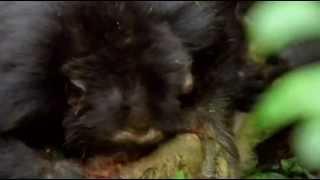 getlinkyoutube.com-Самые опасные животные в мире ( стайные охотники )