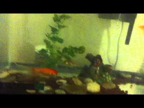 10 gallon fish tank 2012