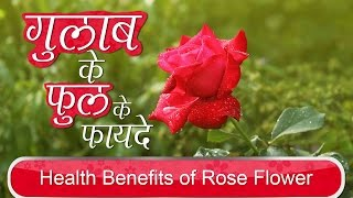गुलाब के फुल के फायदे | Health Benefits of Rose Flower for Weight Loss & Eyes in Hindi