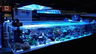 getlinkyoutube.com-Bio Reef [LFS Travel Ep. 11]