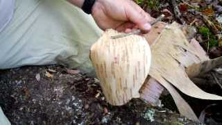 How to make a Birch Bark Cup - Redux