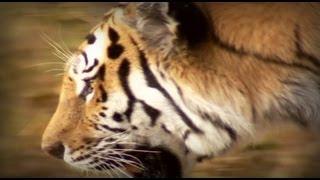 getlinkyoutube.com-La Guerra del Tigre (documental completo)