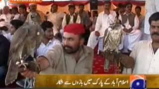 getlinkyoutube.com-Pakistan Falconry News Report