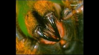 Geliebt und gefürchtet: Spinnen