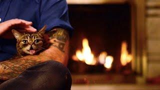 Lil BUB's NEW Magical Yule LOG Video (2014)