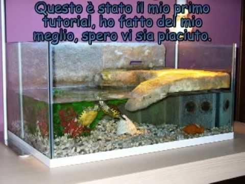 Come costruire un acquaterrario per tartarughe animali for Costruire tartarughiera in vetro