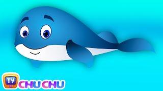 getlinkyoutube.com-Blue Whale Nursery Rhyme | ChuChuTV Sea World | Animal Songs & Nursery Rhymes For Children