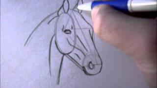 getlinkyoutube.com-How to draw a simple horsehead