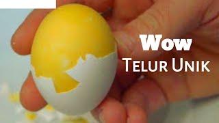 getlinkyoutube.com-Cara Membuat Telur Kuning Diluar Putih Didalam [EKSPERIMEN]