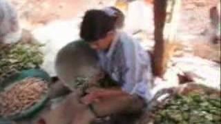 getlinkyoutube.com-Arecanut Plantation