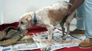 getlinkyoutube.com-Sad story can make you cry -  A dogs story...