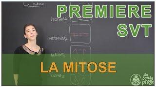 getlinkyoutube.com-La mitose - SVT - 1ère S - Les Bons Profs
