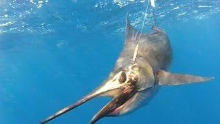getlinkyoutube.com-deep sea fishing underwater video in Zihuatanejo mexico