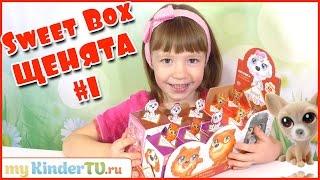 getlinkyoutube.com-ПУШИСТИКИ (СОБАЧКИ) Sweet Box. #1 Распаковываем собачек Свит Бокс с Ариной