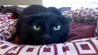 getlinkyoutube.com-Приколы! подборка СМЕШНОГО видео котов! 20 мин Угара! подборка 2014 Funny Cats Compilation 20 min
