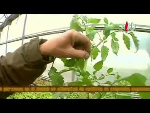 Cultivando Hortalizas en Casa