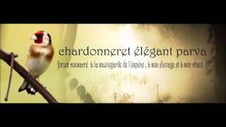 getlinkyoutube.com-Chant Chardonneret d'Algerie Parva Rec en France 2006 Top