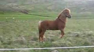 getlinkyoutube.com-horses in iceland
