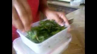 getlinkyoutube.com-how to store cliantro or coriander leaves for 1 month