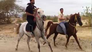 getlinkyoutube.com-الفرس مشاعل والحصان نسر
