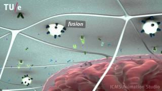 getlinkyoutube.com-Energy metabolism in skeletal muscle cells