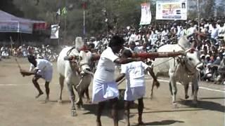 getlinkyoutube.com-2010 Mahanandi bulls show
