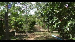 getlinkyoutube.com-เกษตรทำเงิน : ไร่นาสวนผสม