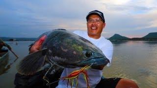 getlinkyoutube.com-Memorable Snakehead Thailand 2013
