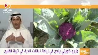getlinkyoutube.com-يوسف سويلم الكريباني العازمي لزراعه الطماطم السوداء