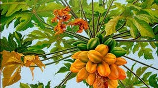 How to Grow Papaya - TvAgro By Juan Gonzalo Angel