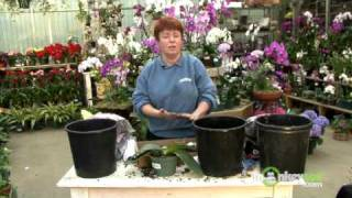 getlinkyoutube.com-Repot an Orchid with Bark