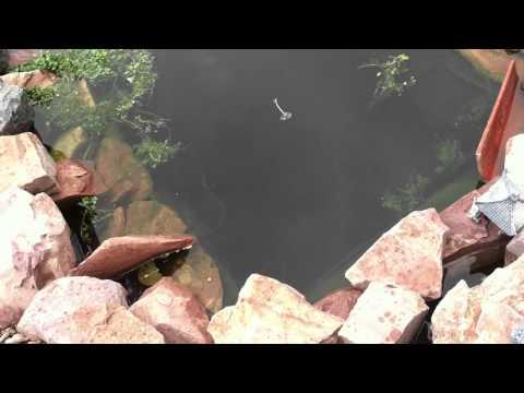 Raised pond w. Koi and waterfall