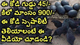 getlinkyoutube.com-Kadaknath Chicken Specalities Will Shock You