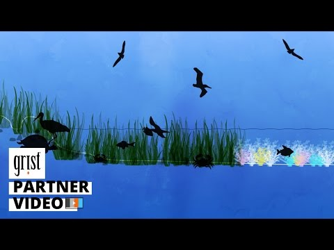Living shorelines: How nature can help us beat back rising seas