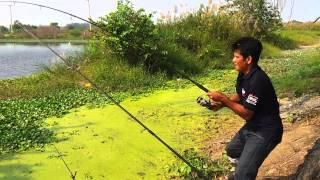 getlinkyoutube.com-ตกปลา Big ชะโด อุปสรรคใต้น้ำ