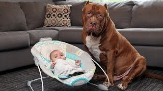 Amazing-Dogs-Meet-Newborn-Babies-First-Time-Dog-Love-Baby-Video-Compilation width=