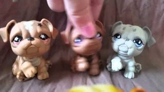 "getlinkyoutube.com-LPS: ""Zakreceni"" #46 Littlest Pet Shop !!!"