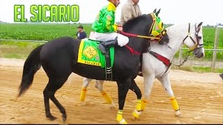 getlinkyoutube.com-El Sicario C. Piedreros | 4to Finalista | Pesos Pesados